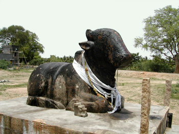 The nandi, Kodumbalur